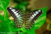NailMUA: Butterfly Screen Saver